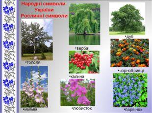 Народні символи України Рослинні символи верба дуб тополя калина чорнобривці