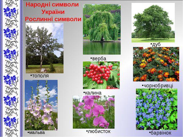 Народні символи України Рослинні символи верба дуб тополя калина чорнобривці...