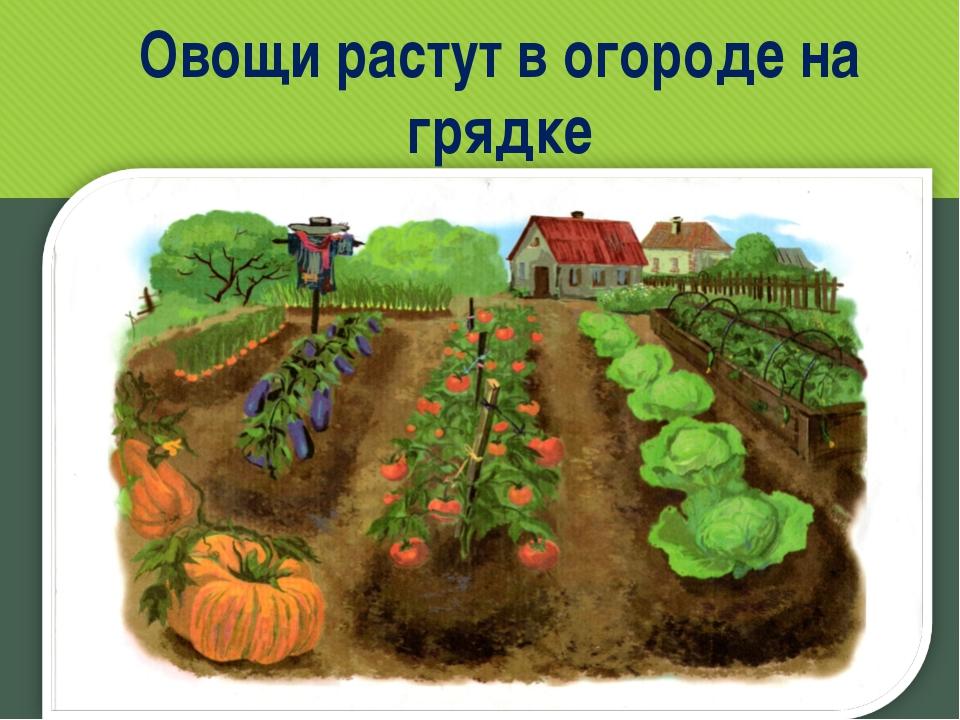 Овощи растут в огороде на грядке www.logoped.ru
