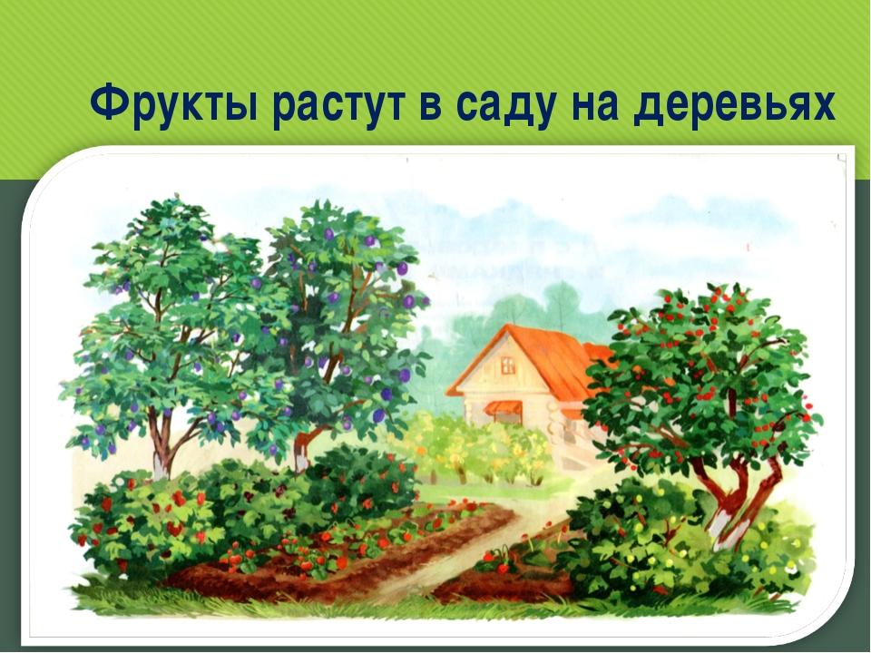 Фрукты растут в саду на деревьях www.logoped.ru
