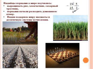 Индийцы первыми в мире научились: выращивать рис, хлопчатник, сахарный тростн