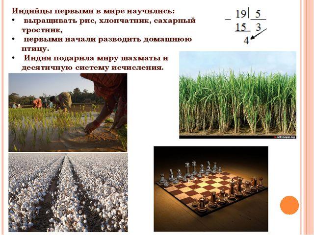 Индийцы первыми в мире научились: выращивать рис, хлопчатник, сахарный тростн...