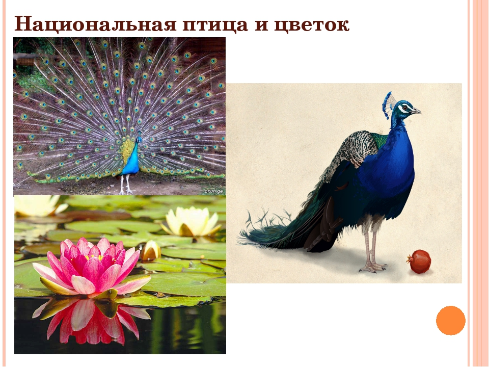 Национальная птица и цветок