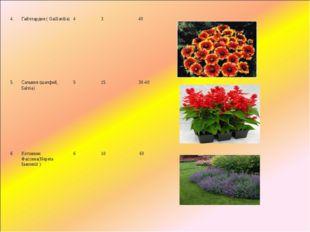 4.Гайллардия(Gaillardia)4340 5.Сальвия (шалфей, Salvia)51530-40