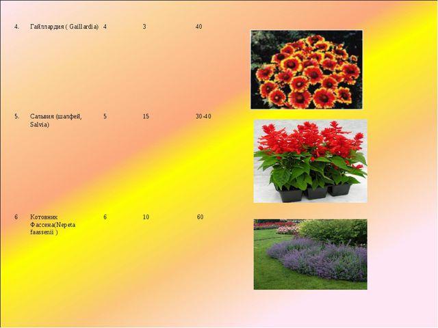 4.Гайллардия(Gaillardia)4340 5.Сальвия (шалфей, Salvia)51530-40...