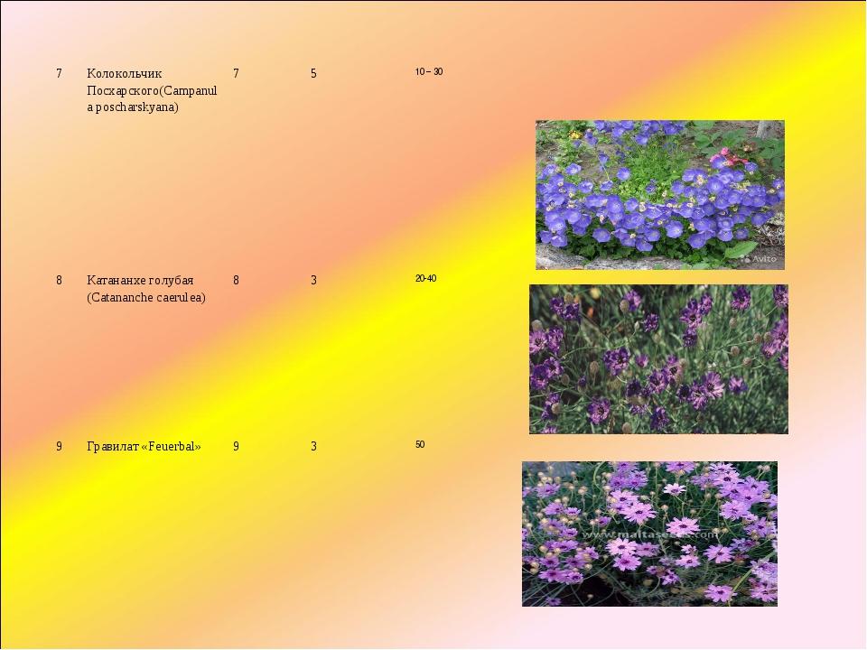 7Колокольчик Посхарского(Campanula poscharskyana)7510 – 30 8Катананхе г...
