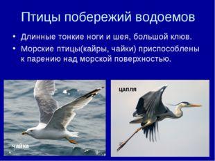 Птицы побережий водоемов Длинные тонкие ноги и шея, большой клюв. Морские пти