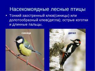 Насекомоядные лесные птицы Тонкий заостренный клюв(синицы) или долотообразный