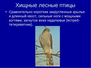 Хищные лесные птицы Сравнительно короткие закругленные крылья и длинный хвост