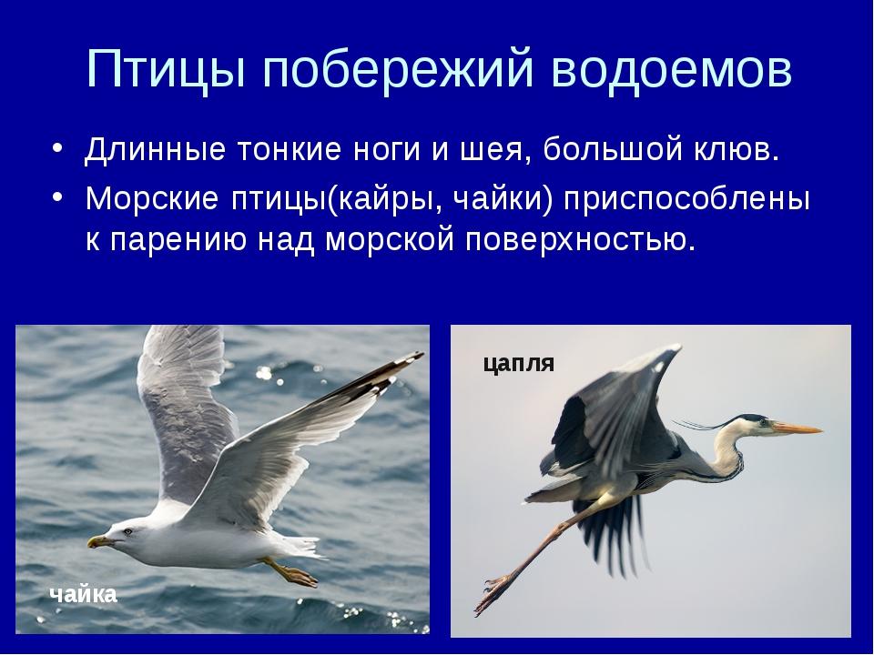Птицы побережий водоемов Длинные тонкие ноги и шея, большой клюв. Морские пти...