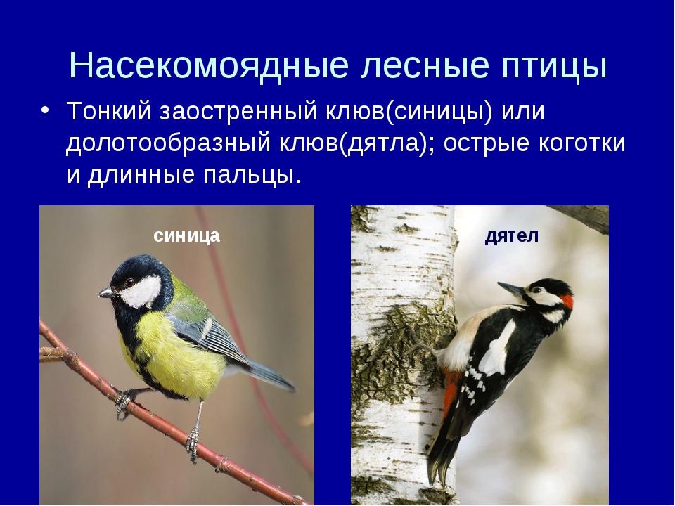 Насекомоядные лесные птицы Тонкий заостренный клюв(синицы) или долотообразный...