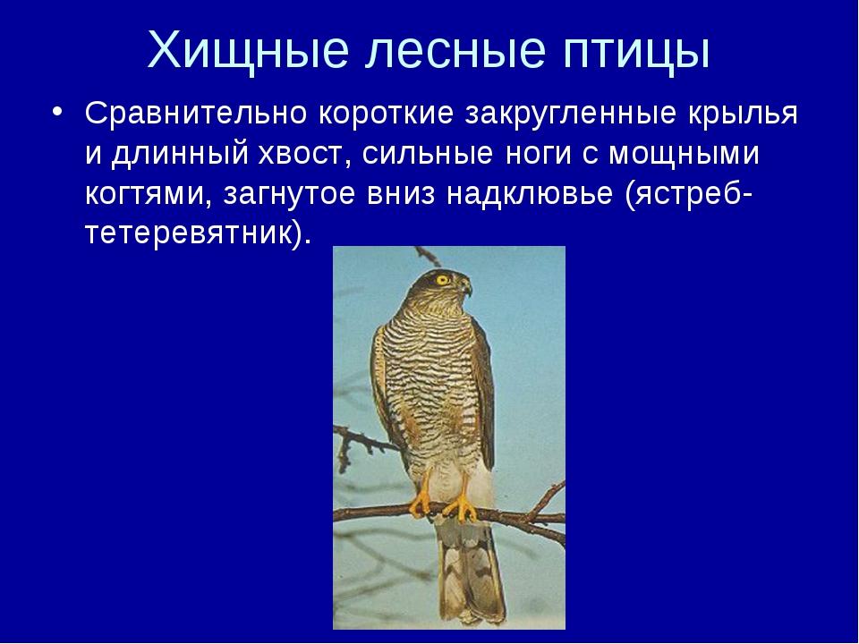 Хищные лесные птицы Сравнительно короткие закругленные крылья и длинный хвост...