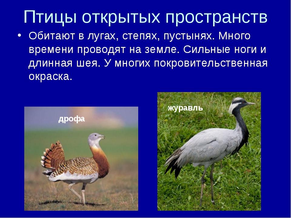 Птицы открытых пространств Обитают в лугах, степях, пустынях. Много времени п...