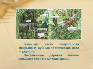 Большую часть полуострова покрывают буйные тропические леса – джунгли. Выс