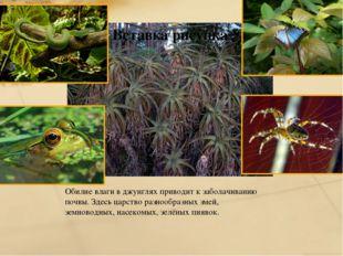 Обилие влаги в джунглях приводит к заболачиванию почвы. Здесь царство разнооб