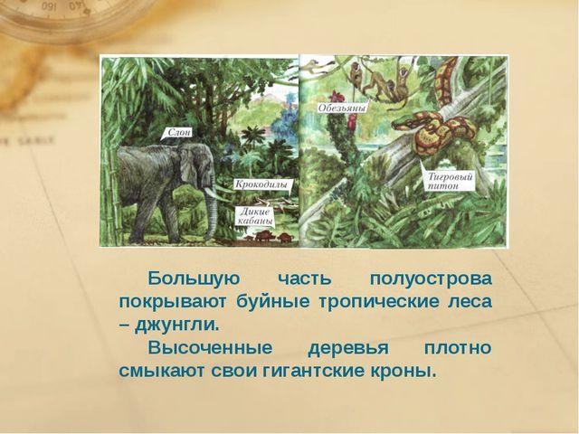 Большую часть полуострова покрывают буйные тропические леса – джунгли. Выс...