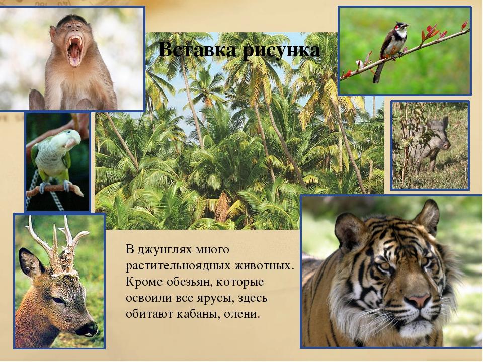 В джунглях много растительноядных животных. Кроме обезьян, которые освоили вс...