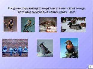 На уроке окружающего мира мы узнали, какие птицы остаются зимовать в наших кр