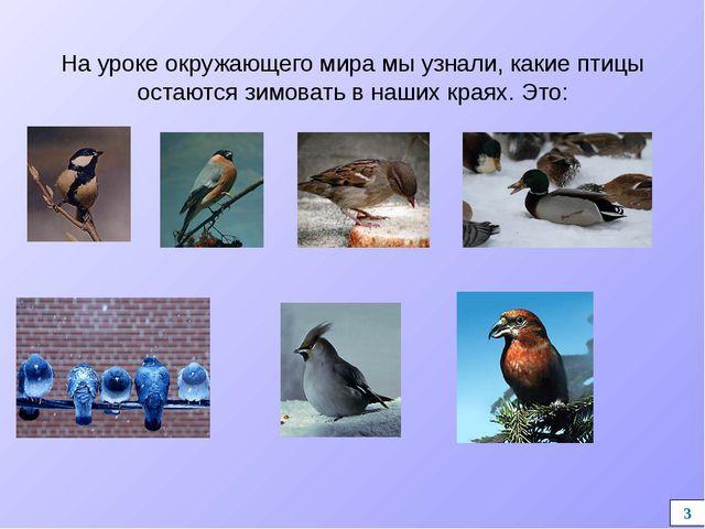 На уроке окружающего мира мы узнали, какие птицы остаются зимовать в наших кр...