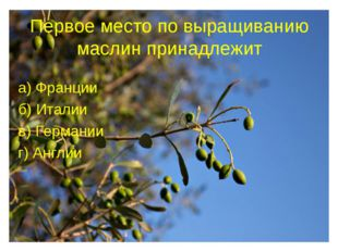 Первое место по выращиванию маслин принадлежит а) Франции б) Италии в) Герман