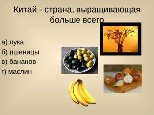 Китай - страна, выращивающая больше всего а) лука б) пшеницы в) бананов г) ма