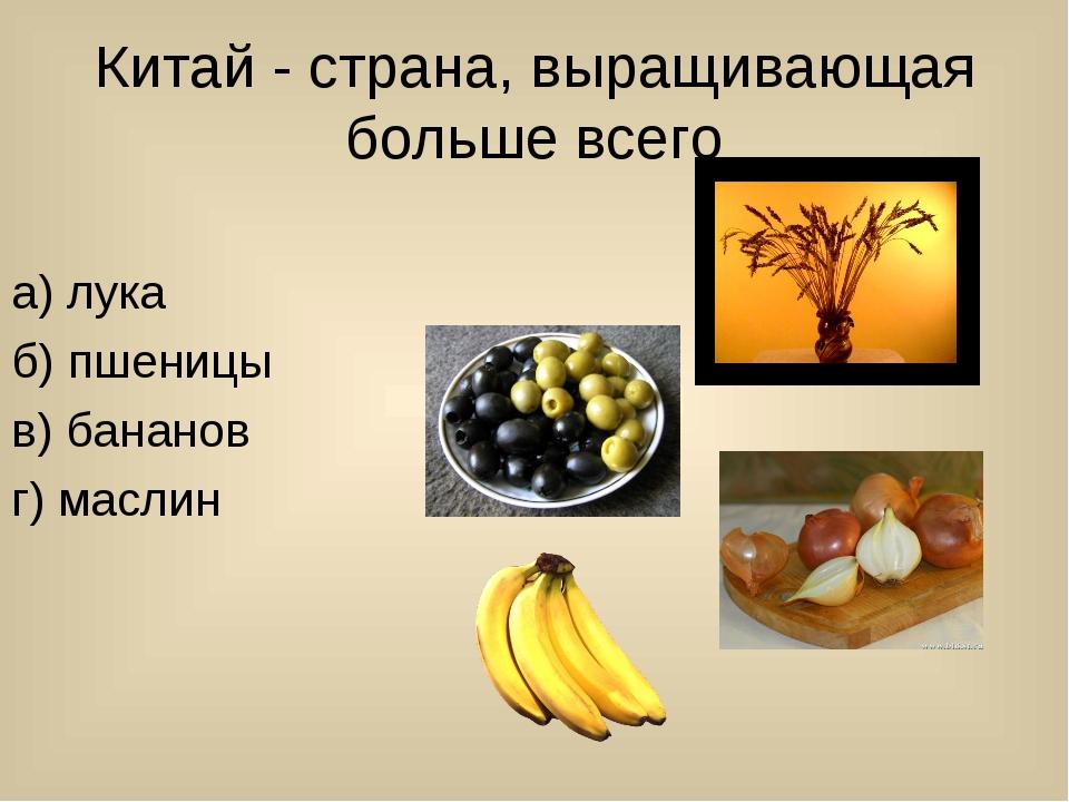 Китай - страна, выращивающая больше всего а) лука б) пшеницы в) бананов г) ма...