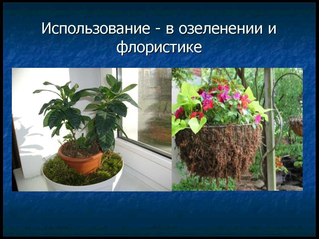 hello_html_5f9635c.jpg