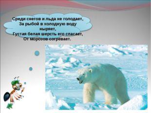 Среди снегов и льда не голодает, За рыбой в холодную воду ныряет, Густая бела