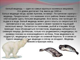 Белый медведь— один из самых крупных наземных хищников. Его длина достигает