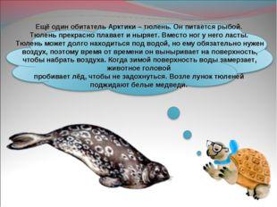 Ещё один обитатель Арктики – тюлень. Он питается рыбой. Тюлень прекрасно плав
