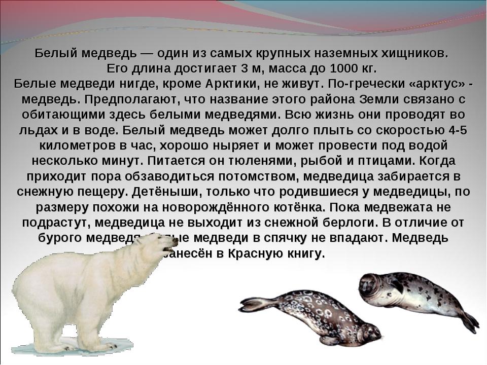 Белый медведь— один из самых крупных наземных хищников. Его длина достигает...