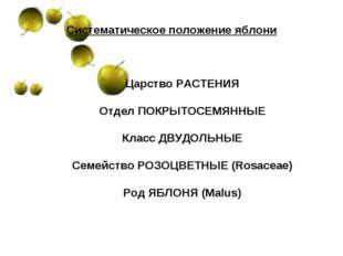 Систематическое положение яблони Царство РАСТЕНИЯ Отдел ПОКРЫТОСЕМЯННЫЕ Класс