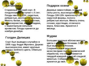 Антоновка Старинный русский сорт. В плодоношение вступает с 5 лет. Плоды мас