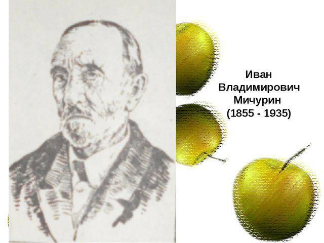 «Сибирь садов не приемлет» Иван Владимирович Мичурин (1855 - 1935)