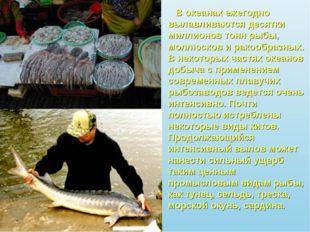В океанах ежегодно вылавливаются десятки миллионов тонн рыбы, моллюсков и ра
