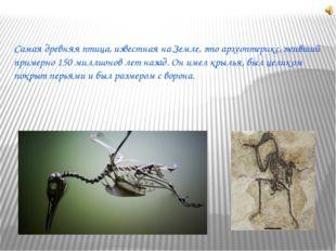 Самая древняя птица, известная на Земле, это археоптерикс, живший примерно 15