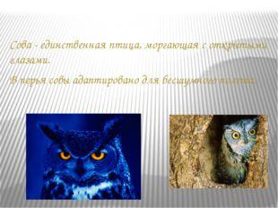 Сова - единственная птица, моргающая с открытыми глазами. В перья совы адапти