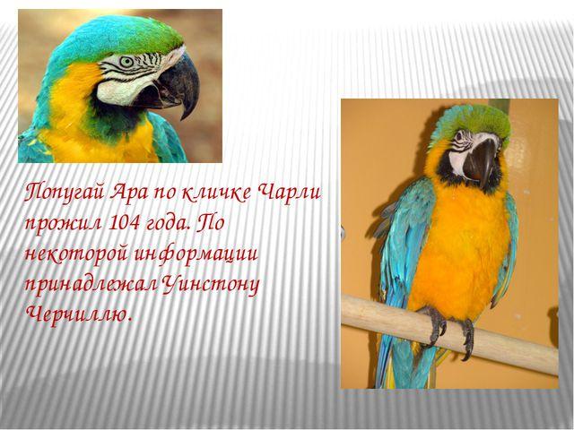 ПопугайАрапо кличке Чарли прожил 104 года. По некоторой информации принадле...