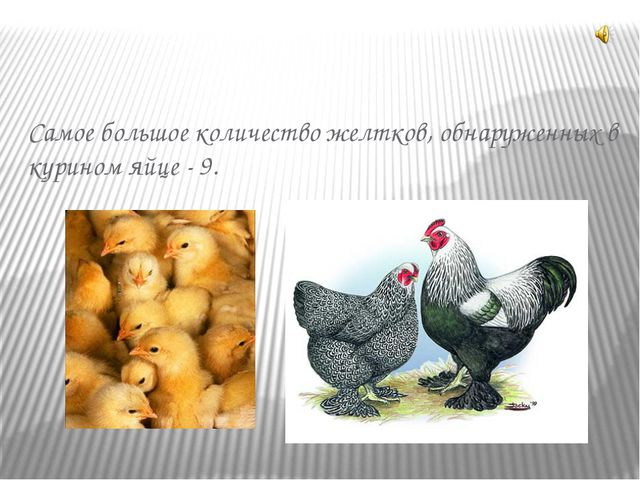 Самое большое количество желтков, обнаруженных в курином яйце - 9.