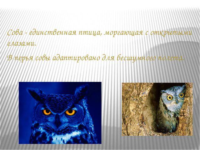 Сова - единственная птица, моргающая с открытыми глазами. В перья совы адапти...