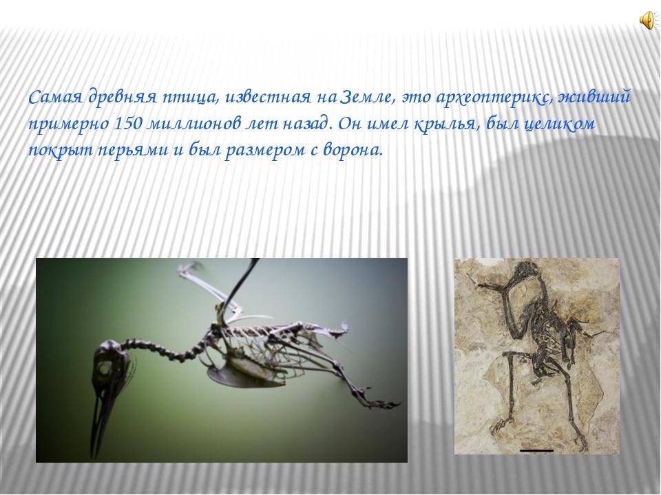 Самая древняя птица, известная на Земле, это археоптерикс, живший примерно 15...