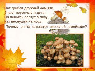 Нет грибов дружней чем эти, Знают взрослые и дети. На пеньках растут в лесу,