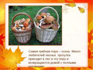 Самая грибная пора – осень. Много любителей лесных прогулок приходит в лес в