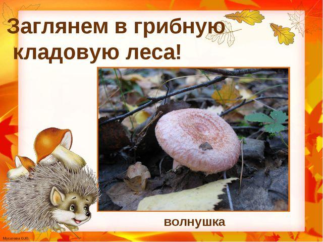 волнушка Заглянем в грибную кладовую леса! Мусатова О.Ю.