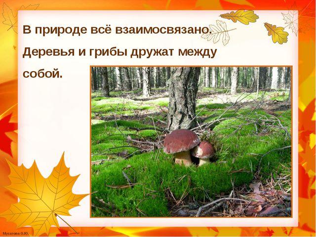 В природе всё взаимосвязано. Деревья и грибы дружат между собой. Мусатова О.Ю.
