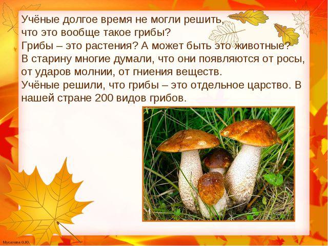 Учёные долгое время не могли решить, что это вообще такое грибы? Грибы – это...