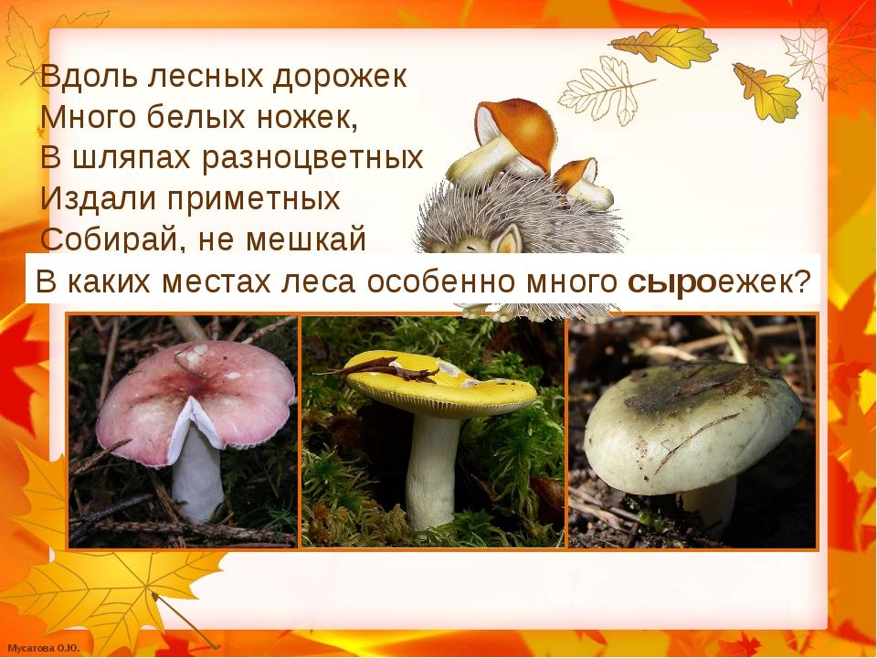 Вдоль лесных дорожек Много белых ножек, В шляпах разноцветных Издали приметны...