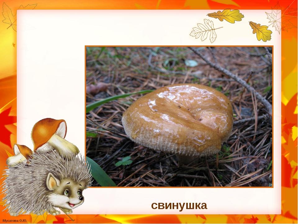 свинушка Мусатова О.Ю.