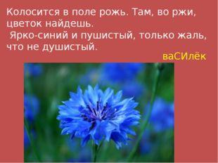 Колосится в поле рожь. Там, во ржи, цветок найдешь. Ярко-синий и пушистый, то