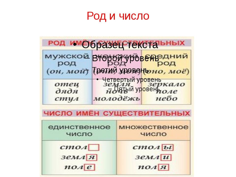 Род и число